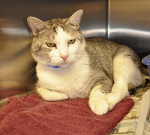 Dewey the cat  (ID No. 531900) is 9 years young and still has many more years ahead of him.