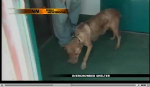 This golden-haired dog, a new mother was killed on camera by a shelter in NM.