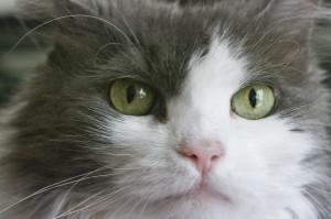 Ernest--That Face