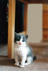 Ernest as kittten