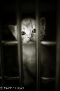 A tiny kitten awaits a foster home at Animal Ark.  From one of my current photography projects 'Living Proof'.