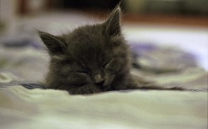 One of that first litter, fast asleep.